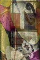 Phantom Lily, digital giclee print, 2008