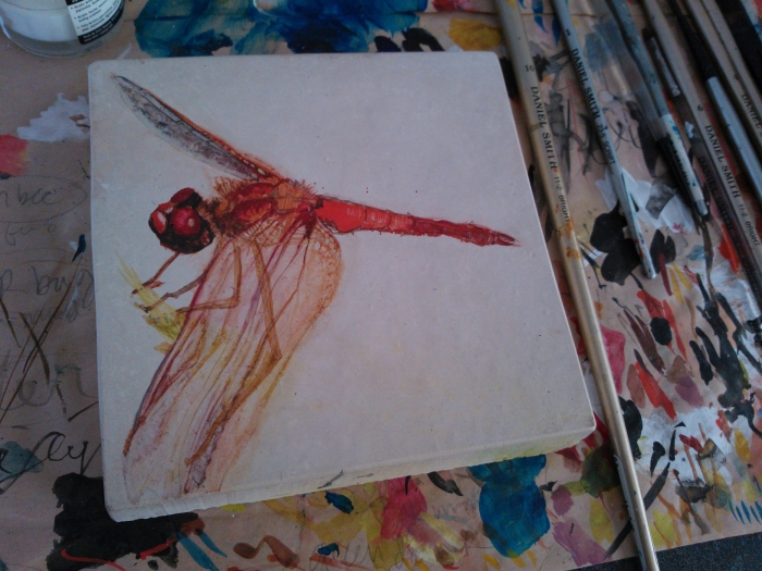 meadowlark dragonfly, 2013