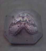 moth, watercolor on concrete, 2013