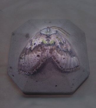 moth, watercolor on concrete, 2013