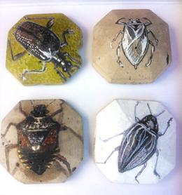 winged.beetle.detial