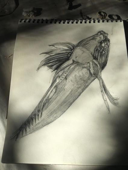 midshipman-drawing